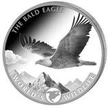 Kongo - Weißkopfseeadler 2021