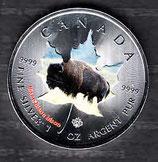 Kanada Wildtiere I 2014 Bison