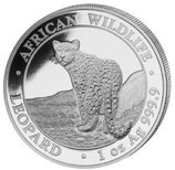 Somalia - Leopard 2018