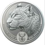 Südafrika - Leopard im Blister 2020