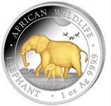 Somalia - Elefant 2022 gildet