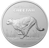 Australien - Zoo Gepard 2021