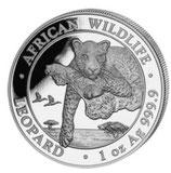 Somalia - Leopard 2020