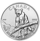 Kanada Wildlife Puma 2012