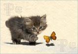 Kätzchen und Schmetterling