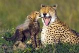 Gepard mit Jungem