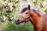 Sitzung Pferd