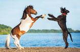 Kombi Pferd & Hund