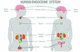 Gutschein Hormonhaushalt regeln
