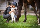 Kombi Pferd & Reiter & Hund