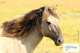 Pferd - PDF Version