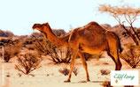 Kamel - PDF Version
