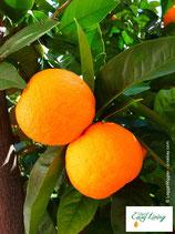 Orange - PDF Version