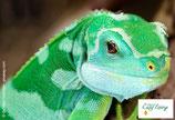 Gecko - PDF Version