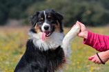 Clickertraining - Hier lernt dein Hund per Knopfdruck