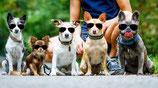 Alltagstauglichkeit - Hundeführerschein