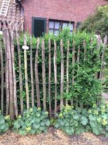 5 m Staketenzaun aus Kastanienholz 137 cm hoch 6 cm Lattenabstand  ( gerade ausverkauft, kommt im Juli wieder neu )