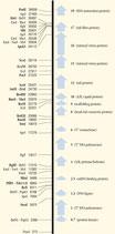 T7 DNA Phage