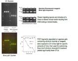 Fluorescent DNA Loading dye DNA-Dye NonTox