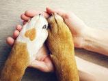 Master of Animal Communication BVTKS (Lehrgang 2021)