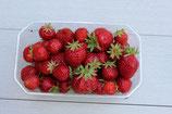 fraises 250g