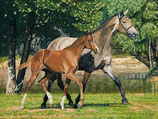 "Motiv ""Pferde"""