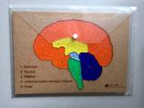 Gehirnmodell – Acryl und Holz (5 teilig)