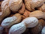 Erdnüsse / Ägypten