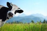 Joghurt natur ABC/Glas