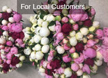 SOLD OUT! Subscription - Sweet Dreams Bouquet - Petite Peonies