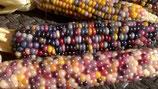 Maiskolben Glasperlenmais / Glass Gem Corn getrocknet mit Lieschblätter