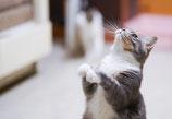 歌川様向け 猫の飼い方・しつけ相談 (1回約90分)