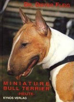 Miniature Bull Terrier heute