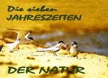 Die sieben Jahreszeiten der Natur und Pirsch durch's ganze Jahr