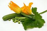 Plants de Courgette Cora