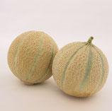 Plant greffé de Melon Sivan