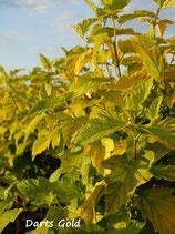 Physocarpus in Sorten