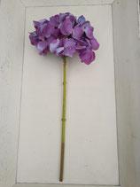 Hortensie fliederfarben