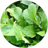 Rúcula (Eruca vesicaria)