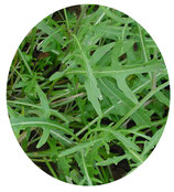 Rúcula selvática (Diplotaxis tenuifolia)