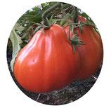 "Tomate ""Canestrino"""