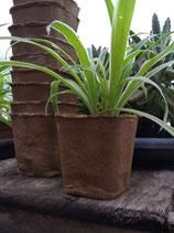 Maceta biodegradable Fertil Pot cuadrada 9 x 9 x 9 cm