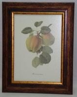 Fruit 6 (Code: F6)