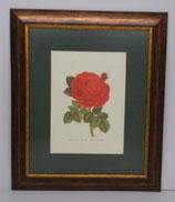 Floral & Plant 8 (Code: FP8P1)