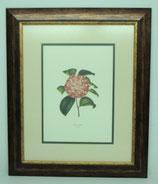Floral & Plant 5 (Code: FP5P2)