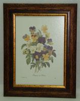 Λουλούδια & Φυτά 18  (ΚΩΔ: FP18)