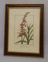 Floral & Plant 19  (Code: FP19M)