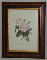 Floral & Plant 6  (Code: FP6)