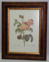 Floral & Plant 13  (Code: FP13)