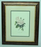 Floral & Plant 6  (Code: FP6P2)